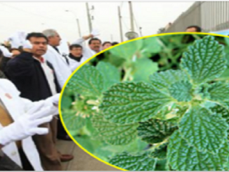 This Plant Cures The Liver And Gallbladder And Eliminates The Inflammation In Your Intestines